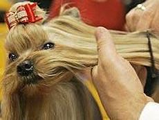 """Самый престижный в мире собачий смотр """"Крафтс"""""""
