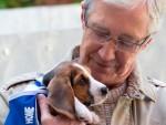 В Британии семьи выбрасывают животных на улицу, чтобы пережить кризис