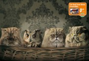 Кошки в лукошке...