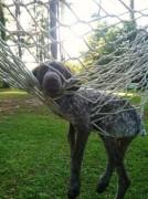 У собаки и гамака плохая совместимость