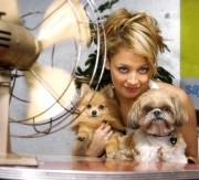 Николь Ричи (Nicole Richie) со своим померанским шпицем Фокси (слева) и ши-тцу Хани Чили.
