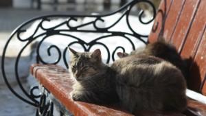 Госдума ужесточит правила содержания домашних животных