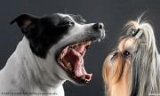 ...«Только от жизни собачьей бывает собака кусачей...»