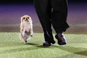 crufts_dog_show_birmingham25