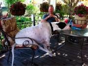 я и моя собака!...