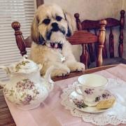Настоящий британец никогда не пропустит чаепитие 5 o'clock