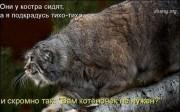 Кому котенка?..