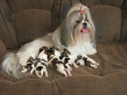 Мама Наоми со щенками