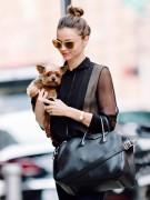 Ангел Victoria's Secret Миранда Керр не оставляет свою собаку ни на секунду. Раньше модель носила на руках только ребенка, а теперь - терьера Франки