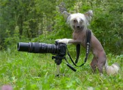 фотограф...