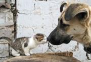 Бедненький мой, дай-ка я тебя поцелую!...
