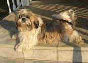 Нафаня любит лежать на солнышке, даже если это на закате...