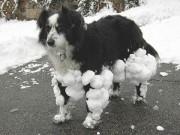 Вот чем заканчиваются прогулки по мокрому снегу!...