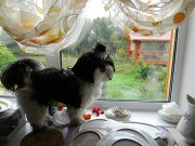 Гулять! Гулять хочу! Сколько можно охранять помытую посуду? (Тося, дочь Тори и Джина)