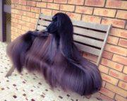 Этот неловкий момент, когда у собаки причёска шикарнее, чем у тебя