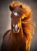 У всех лошадей прекрасная грива, почему у людей не так