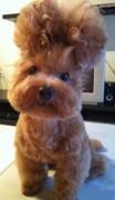 У этого щенка прическа Элвиса Пресли сделана уж точно без использования стайлинговых средств
