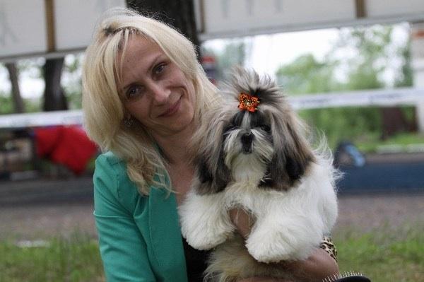 Лучшей собакой весенней выставки стал ши-тцу от Версаче