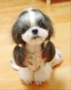 У такого милого щенка хвосты густые и красивые