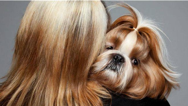 Почему собаки так похожи на своих хозяев