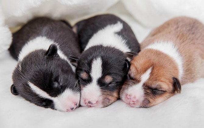 Интересные и малоизвестные факты о собаках