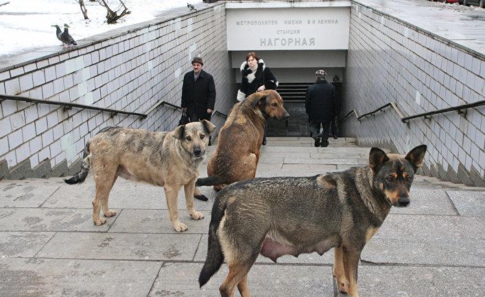 Как бродячие собаки ориентируются в московском метро?