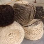 Предлагается прядение шерсти из вычесанного подшерстка вашего любимого питомца