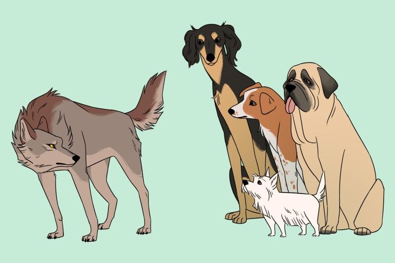 Тайна домашней собаки