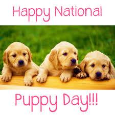 23 марта - праздник - Национальный день щенков
