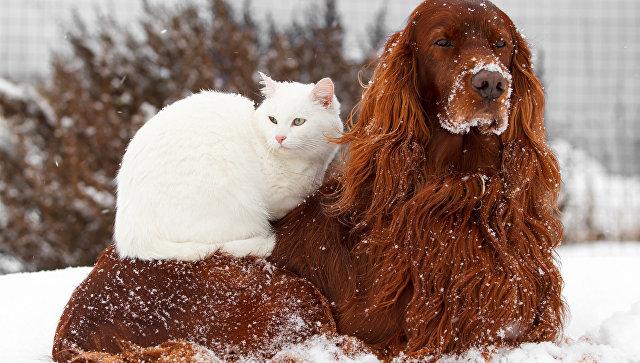 Ученые выяснили, кто умнее — кошки или собаки