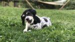 Не все кости одинаково полезны: почему не стоит угощать собаку лакомством из зоомагазина