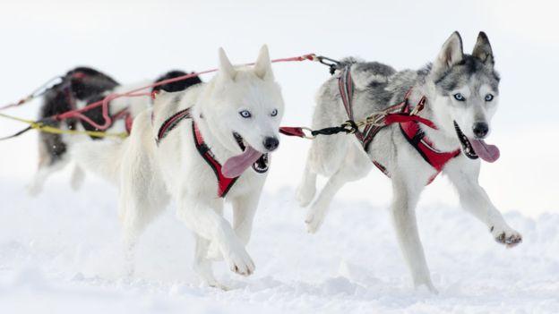 Собаки произошли не от современных волков