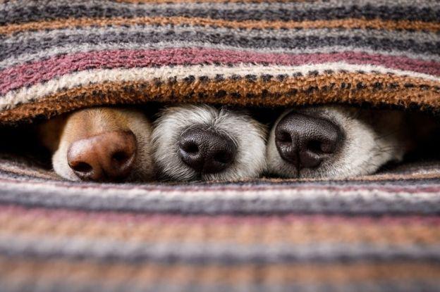 У собак есть второй нос