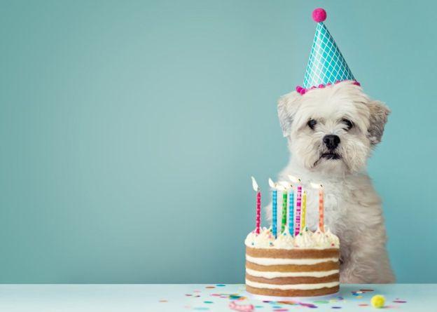 Собаки бывают пессимистами и оптимистами