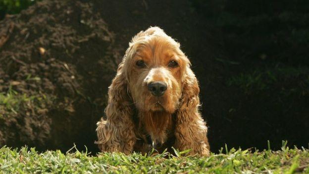 Чувство вины собакам неведомо