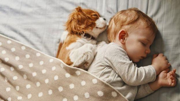 Собаки инстинктивно тянутся к человеку