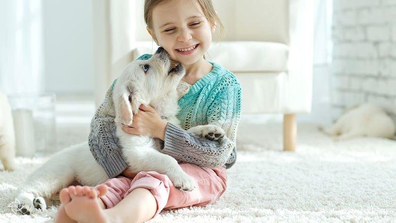 Мое домашнее счастье: 5 лучших пород собак для квартиры