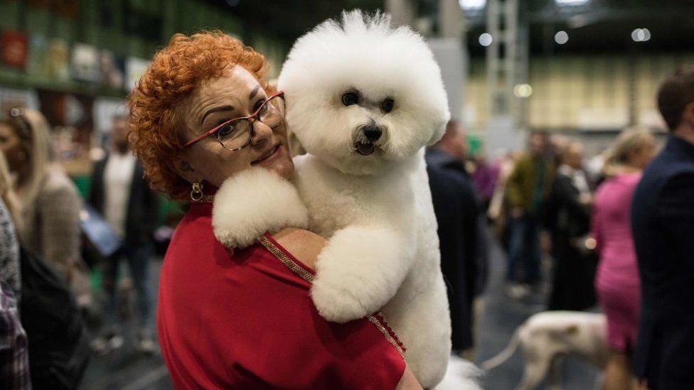 Хозяйка с собакой породы бишон фризе после участия в одном из конкурсов